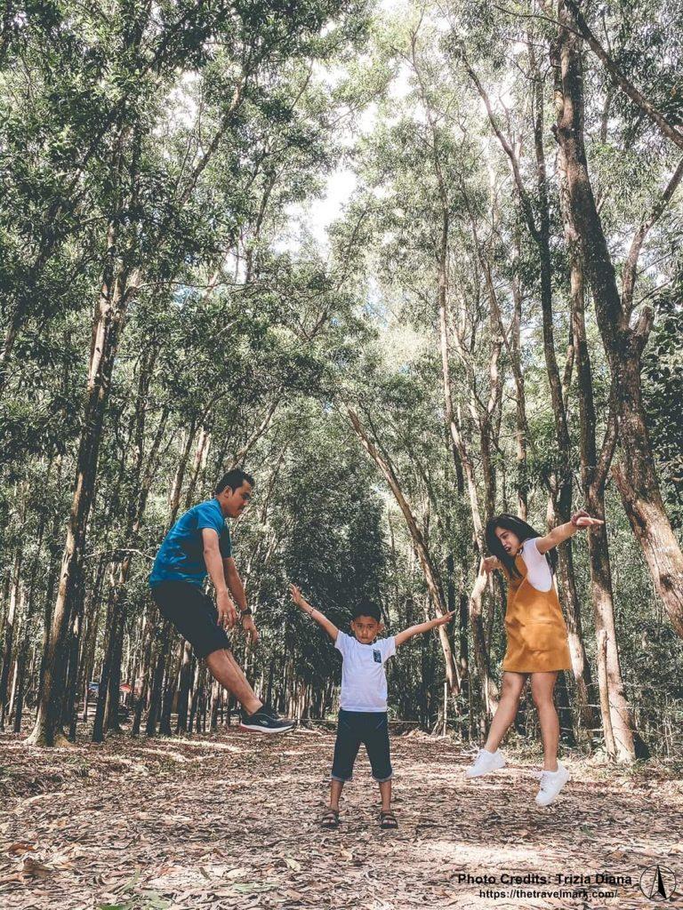 Man-made Forest Guimaras - The Travel Mark