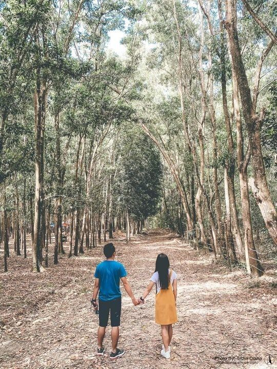 Man-made Forest Guimaras - Bacolod Iloilo Guimaras Boracay DIY Travel Guide