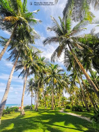 DIY SIARGAO ISLAND HOPPING - Daku Island Swaying Coconut Trees